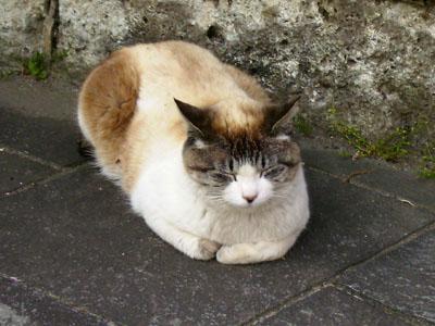 眠り猫1.jpg