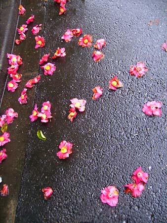 雨の日の散歩6.jpg