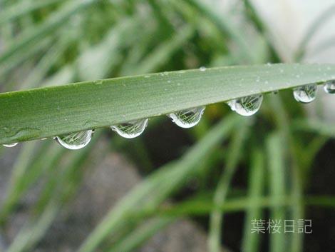 雨のしずく2.jpg